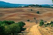 Panoramblick über neue Weinberge der Bodega Farina bei Toro