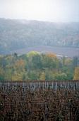 Herbstliche Weinlandschaft in der Champagne