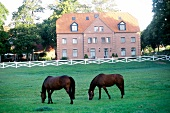 Two horses grazing in front of the Hotel Ole Liese, Panker, Germany