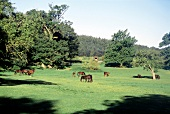 Horses grazing on green pasture surrounded by trees.