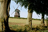 View of an old windmill through trees in the countryside.
