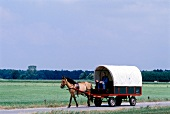 Man riding horse covered wagon passing through field in Holland