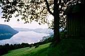 Schweiz: Blick auf Ägerisee, von Hügeln umgeben, von oben, Baum