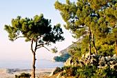 Blick auf Landschaft in der Türkei Felsenküste, Bäume, Meerblick