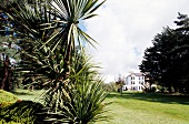 View of house with palm trees in garden, Ireland
