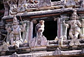 Monkeys sitting at exterior of Hindu temple in Madurai, India