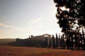 Toskanische Landschaft mit Weingut Morisfarms im Hintergrund