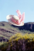 Straw hat with pink ribbons flying through the air