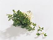 Kräuter und Knoblauch; Gartenkresse abgeschnitten
