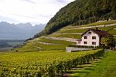 Weingut Domaine Ovaille bei Yvorne in der Schweiz