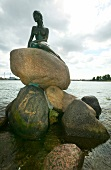 The Little Mermaid sculpture in Copenhagen, Denmark