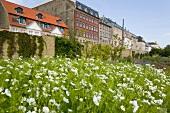 Garden of Rosenborg Castle at Solvgade street, Copenhagen, Denmark