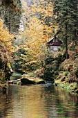 Hütte mitten im Wald an Kirnitzsch, Herbst, Wasser, Abgeschiedenheit