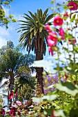 Madeira: Garten mit Palmen und Blü- ten in Jardim Municipal, malerisch