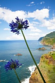 View of coast in Madeira island, Funchal, Portugal