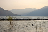 View of Ascona mountain range, lake and reeds at dusk in Ticino, Switzerland