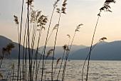 View of Ascona mountain range and lake at dusk in Ticino, Switzerland