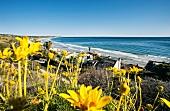 Los Angeles: Malibu, Strand, Häuser, Meerblick, blauer Himmel