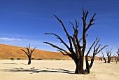 View of Namib-Naukluft National Park in Namibia, Namibia