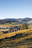 Schwarzwald: Hügellandschaft, Wälder Weiden, Häuser, herbstlich