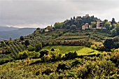 Italien, Toskana, Blick über Wein- landschaft bei Panzano
