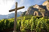 Wallis, Blick auf die Weinterrassen, ein Holzkreuz im Vordergrund