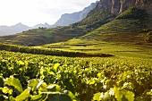 Wallis, Blick auf die Weinterrassen,