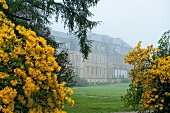 View of Castle Gaussig and yellow flower in fog, Saxony, Germany