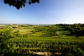 View of wine landscape in Neive, Piedmont, Italy