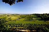 Italien, Piemont, Weinlandschaft bei Neive
