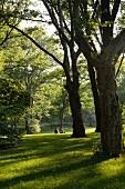 New York: Entspannung, Schatten, Bäume, Central Park, x