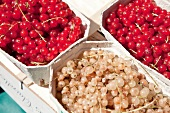 Close-up of fresh currants in boxes