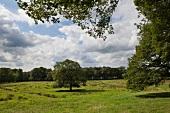 Worpswede: Weyerberg, Weide mit Bäumen, grün, sommerlich.