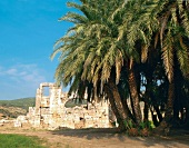 View of ruins, palm trees and blue sky, Patara, Turkey
