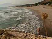 Patara: Dünen, Strand, Meerblick, blauer Himmel