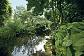View of garden pond