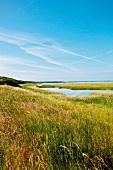 Ostseeküste: Geltinger Birk, Natur- schutzgebiet, malerisch