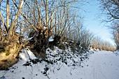 Ostseeküste: Knick, Wallhecke, verschneit