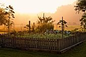 View of vegetable patch at sunrise