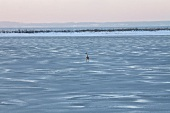 View of fjord winter ice at Baltic Sea Coast, Germany
