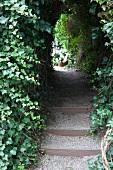 Garden passage through ivy