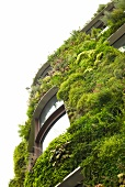 Low angle view of exterior of house covered with overgrown plants in Paris, France