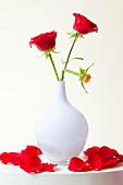 rote Rosen, weiße Vase, geknickt, Rose, verwelkt, Rosenblätter