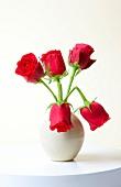 rote Rosen, weiße Vase, geknickt, abgeknickt, Rose