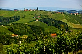 View of vineyards at Gamlitzer Eckberg, Southern Styria, Austria