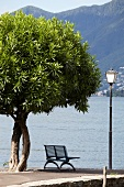 View of Bank in Ascona on Lake Maggiore, Ticino, Switzerland