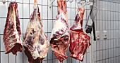 Raw meat hanging from meat hooks in a cold storage room