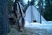 Trysil, Norwegen, Schlittenfahrt am Abend mit Pferd, Pause, Zelt