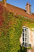 Creepers on wall of house in Arbois, Franche-Comte, France