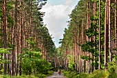 Polen: Ermland-Masuren, Masuren, nahe Mikolajki, Wald
